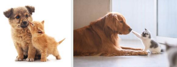 如何防止狗追貓:管理