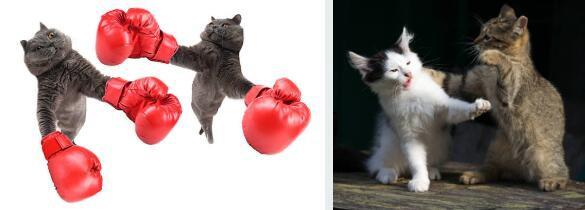如何阻止小貓與附近的其他貓打架