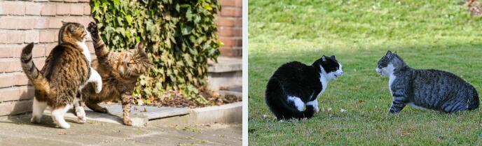 阻止貓在外面打架的5條提示